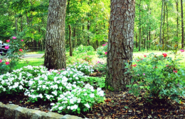landscaping7