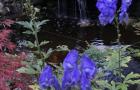 Spring-Flower-Planting-service-10