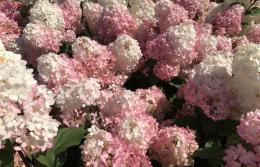Spring-Flower-Planting-service-2