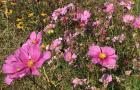 Spring-Flower-Planting-service-3