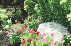 Spring-Flower-Planting-service-4
