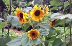 Spring-Flower-Planting-service-5