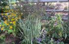 Spring-Flower-Planting-service-6