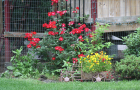 Spring-Flower-Planting-service-9