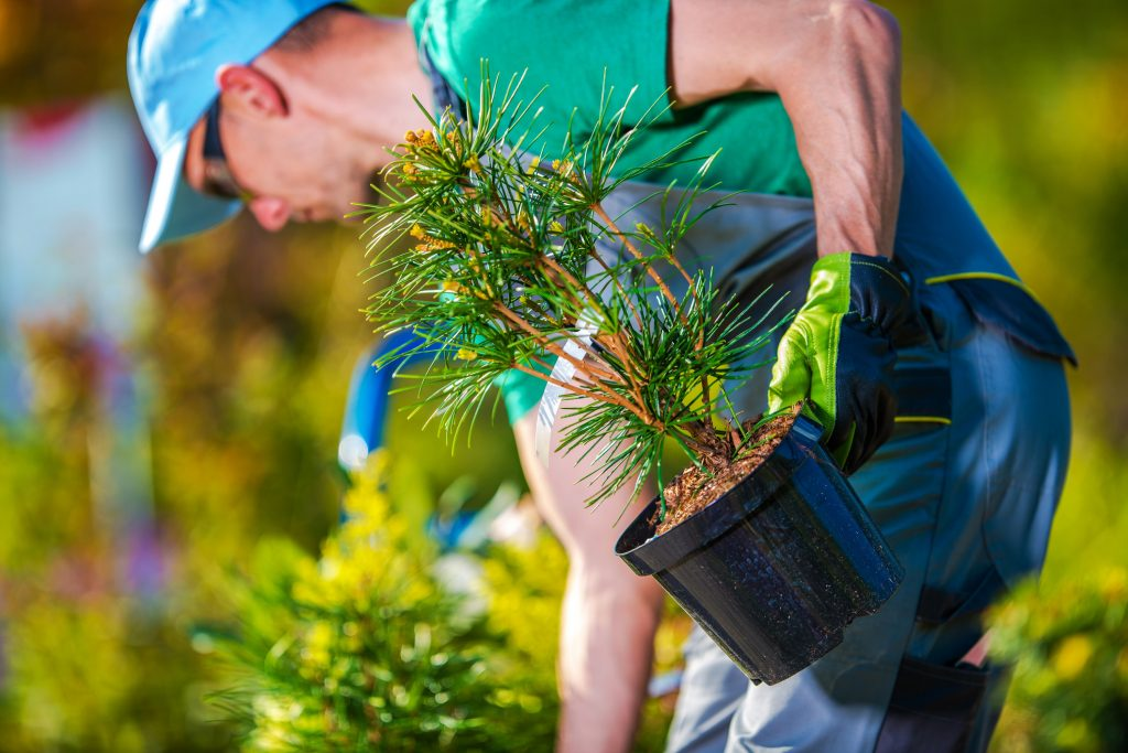 Medford Lakes Landscaping Companies